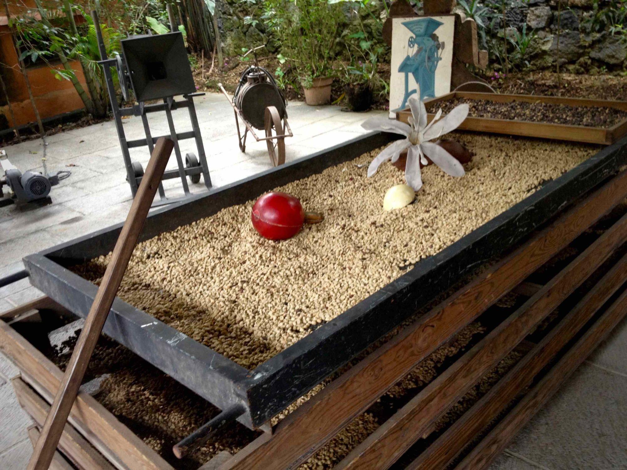 Muzeum na kávové farme v Coatepecu